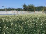 沖縄農場外風景